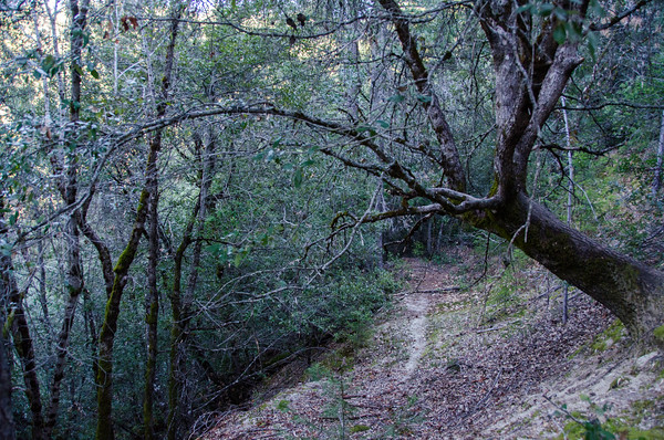 Whiskeytown Falls trail, Whiskeytown National Recreation Area