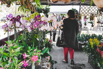 Miss G. looking for orchids