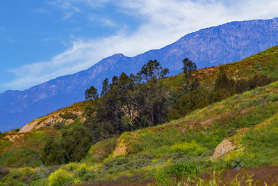 San Timoteo Canyon in Spring