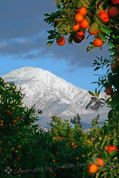 Mountain Grove Vista