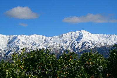 Snowy Peaks and Orange Groves ~