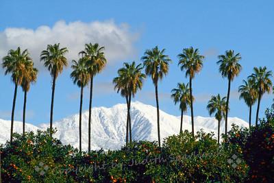 Peaks to Palms