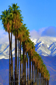 Palm Rows