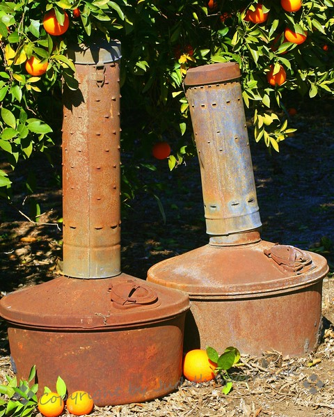 Grove Relics ~ Smudge Pots in the orange grove
