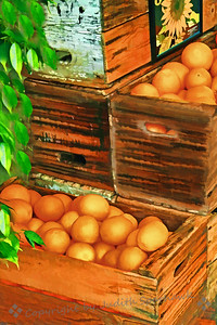 Grove Harvest