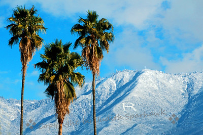 Three Palms and the R