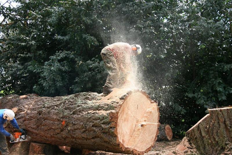 Martin sawing.