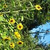 Mid July 2003IMG_0376.JPG
