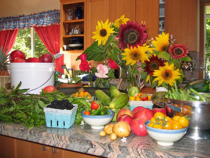 Late August 2003 - Harvest5.JPG