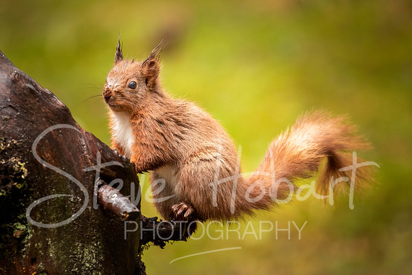 2021 03 11 - red squirrel shoot - 0005