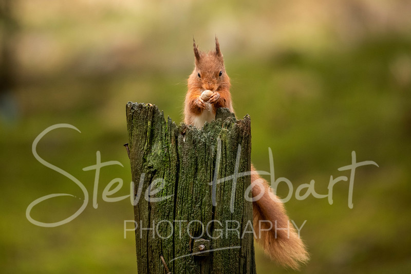 2021 03 11 - red squirrel shoot - 0007