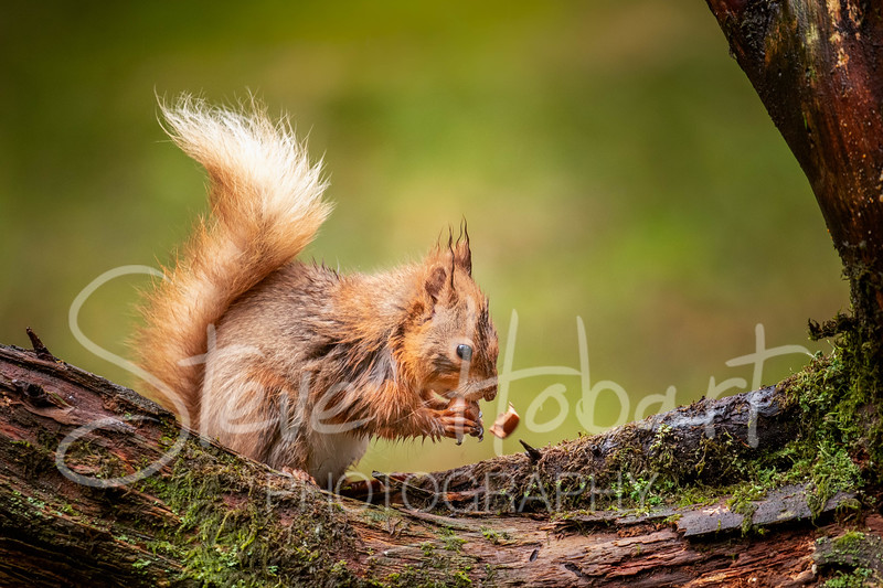 2021 03 11 - red squirrel shoot - 0006