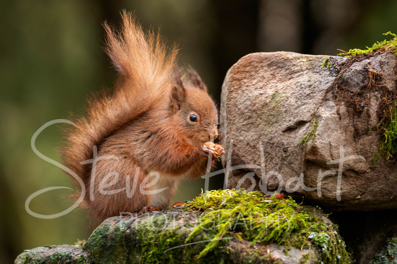 2021 03 11 - red squirrel shoot - 0019