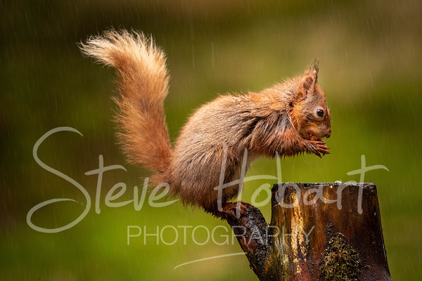 2021 03 11 - red squirrel shoot - 0003