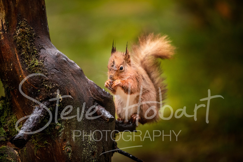2021 03 11 - red squirrel shoot - 0001