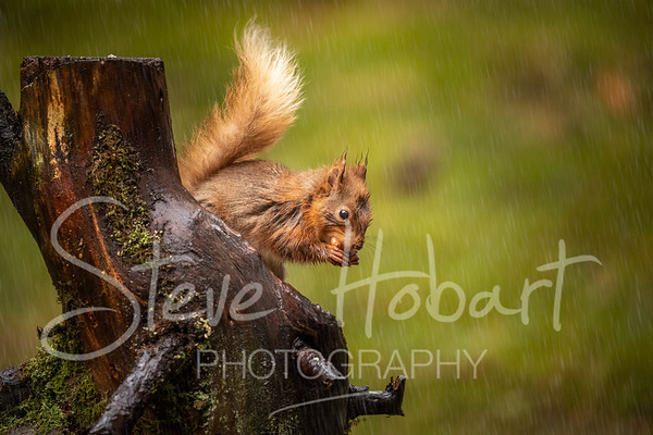 2021 03 11 - red squirrel shoot - 0004