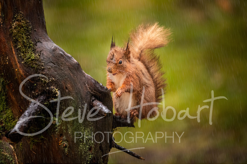 2021 03 11 - red squirrel shoot - 0002