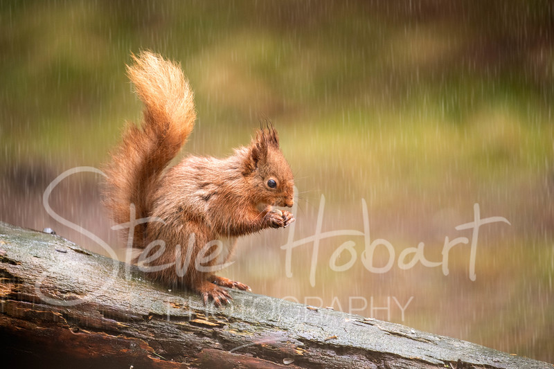 2021 03 11 - red squirrel shoot - 0011