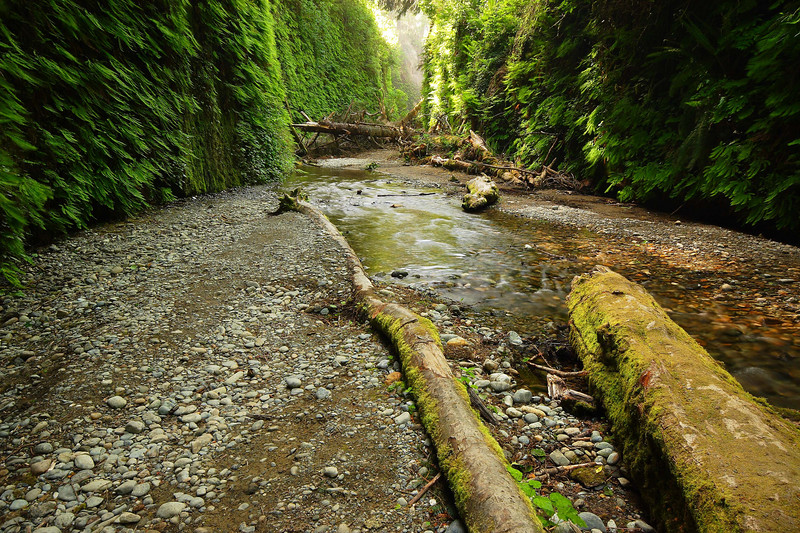 Fern Canyon, Morning