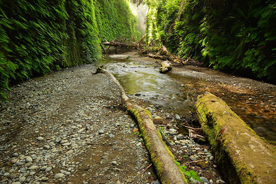 Fern Canyon, Morning Redwood National Park California