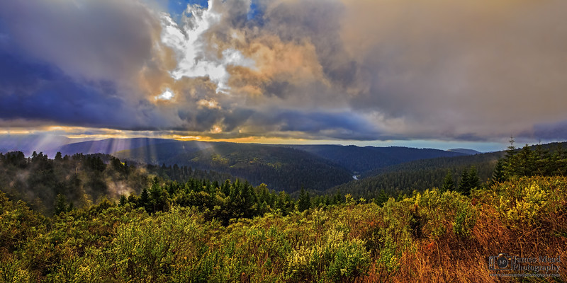 """""""Evergreen Light,"""" Redwood Nationa and State Parks, California"""