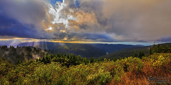 """Evergreen Light,"" Redwood Nationa and State Parks, California"