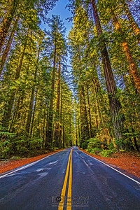 The Lonely Highway, Redwood National and State Parks, California