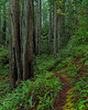 Trail Drops Into Shadows & Sea Of Ferns