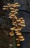 Tall Stack Of Mushrooms