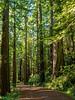 Road/Trail Climbs Gradually
