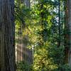 Light Slips Through Downslope Forest