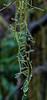 Moss & Water Drops