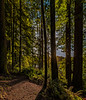 Elk Prairie Trail Skirts Edge Of Forest