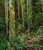 Upper Ten Taypo Trail Has Very Brushy Understory