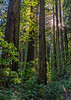 Ridgetop Trail Winds Through Dense Forest - There is a Feeling of Remoteness
