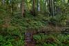 Wooden Bridge Crossing of Hope Creek_Ten Taypo Trail