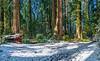 Dedication Grove in Snow