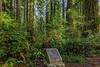Lady Bird Johnson Dedication Site