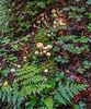 Moss_Ferns & Mushrooms