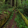 Nature's Handrails