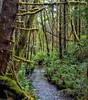 Streelow Creek