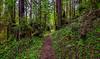 Stump Gardens Along Streelow Trail