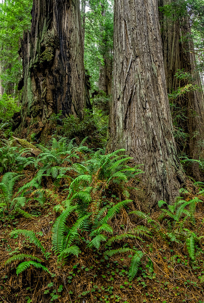 Trillium Falls Trail Runs Along a Hillside of Truly Magnificent Trees