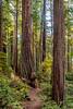Burl & Swirling Bark On Display_West Ridge Trail