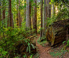 Moving South_West Ridge Trail_Near Zig Zag 2 Trail