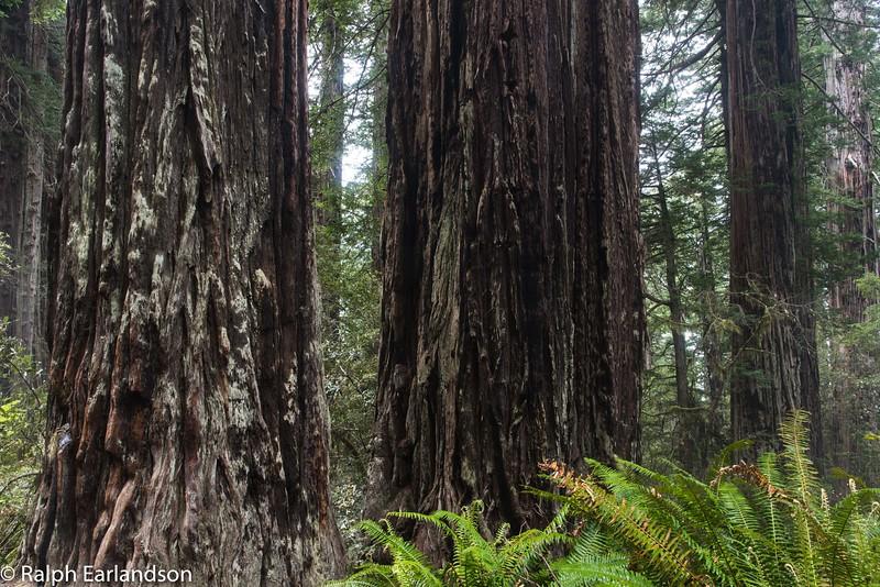 Lady Bird Johnson Grove of Redwoods.