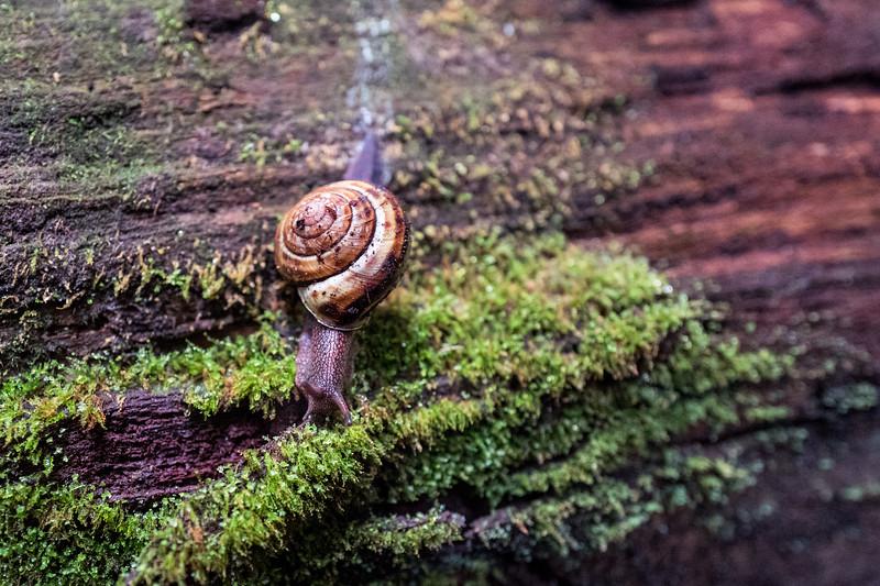 A redwoods friend