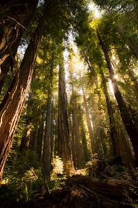 Amazing light at Jedidiah Redwoods State Park, California