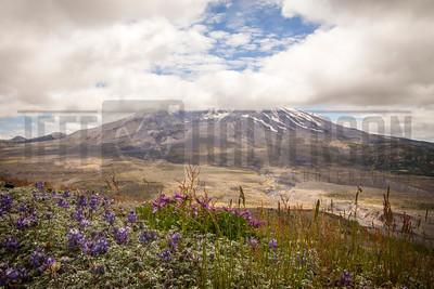 Mount St. Helens - WA