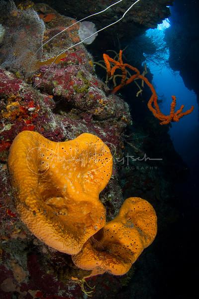 Elephant Ear Sponges at Babylon